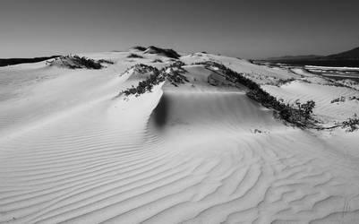 Windswept Dune by AfricanObserver