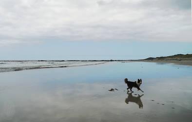 Beach and Dog