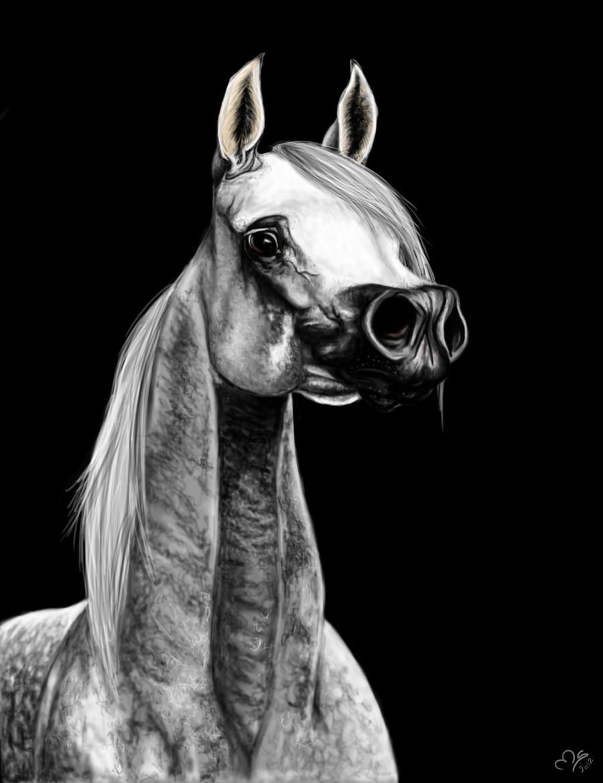 White Arabian Horse by Cristalhoof