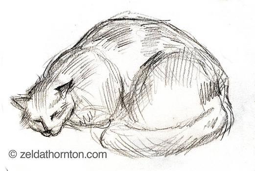 Cat study in pencil