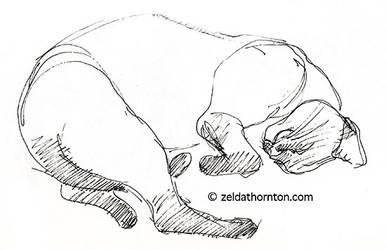 Cat study in ink by zeldat