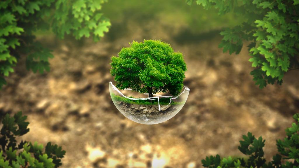 Drzewko W Stuczonej Bace by imaginaryuser