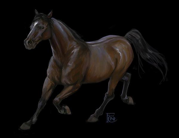 Horse Sketch by feliciacano