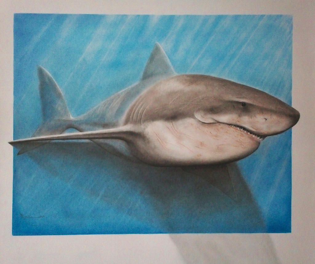 Great White 3D by AnthonyRojas