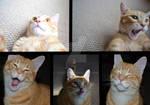 The many faces of Kilo