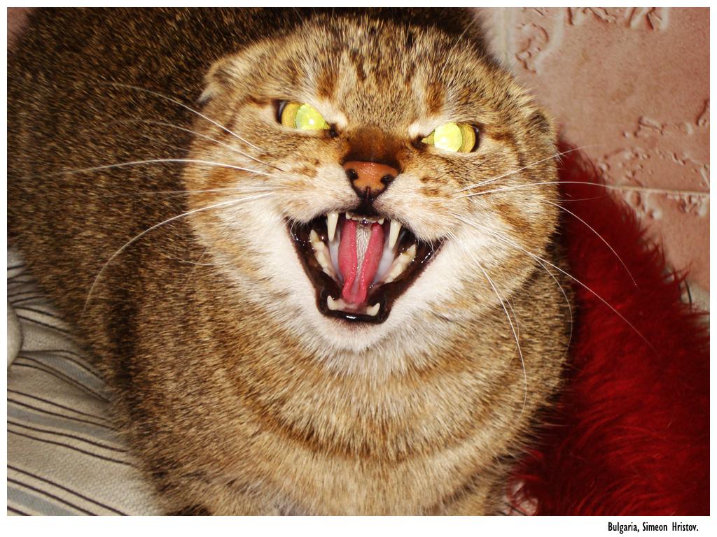 Evil Cat II by Simobg