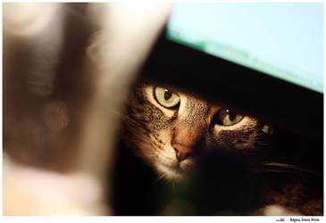 animal eyes (vol. 2)