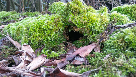 mouse house or hobbit house