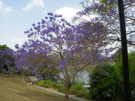 Spring in Brisbane