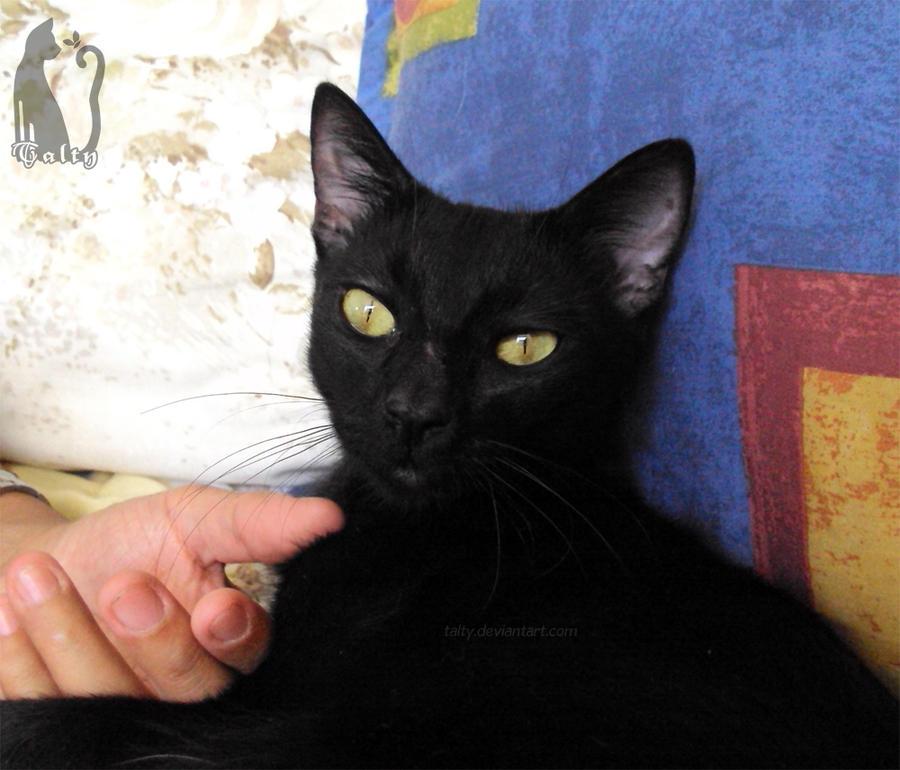 New cat: Meet Buba by Talty