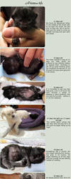 A kitten's life in photos 11 to 31 days old by Talty