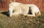 White horse stock 5