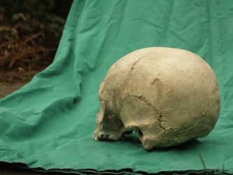 Human Skull 55 by Pronus
