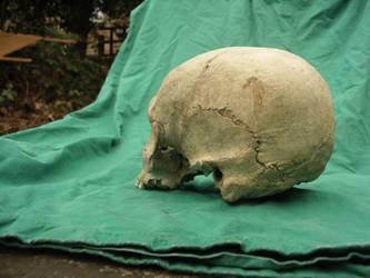 Human Skull 54 by Pronus