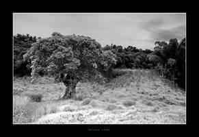 C4D Jamaica Mango Tree by cravingfordesign