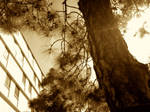 More Sepia Tone Trees by Ayame-Kenoshi