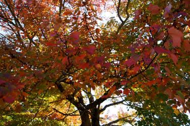 Fall Foliage by Ayame-Kenoshi