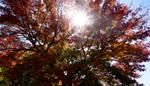 I love trees. by Ayame-Kenoshi