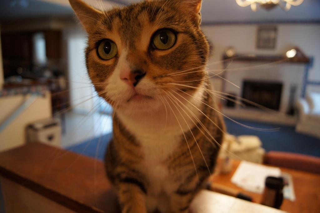 Fisheye Cat by Ayame-Kenoshi