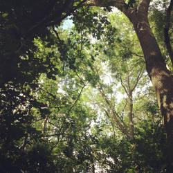 Canopy by Ayame-Kenoshi