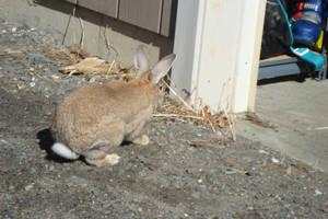 Rabbit Stock Six by ducktoller