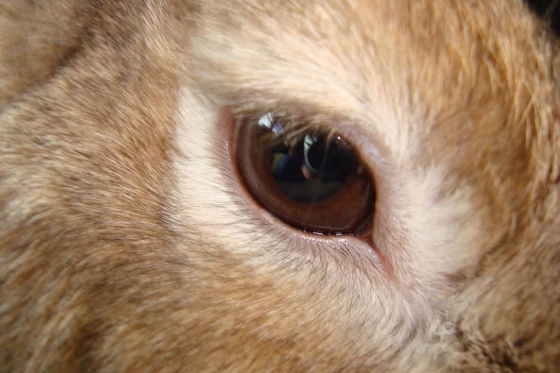 Rabbit Eye Stock One by ducktoller