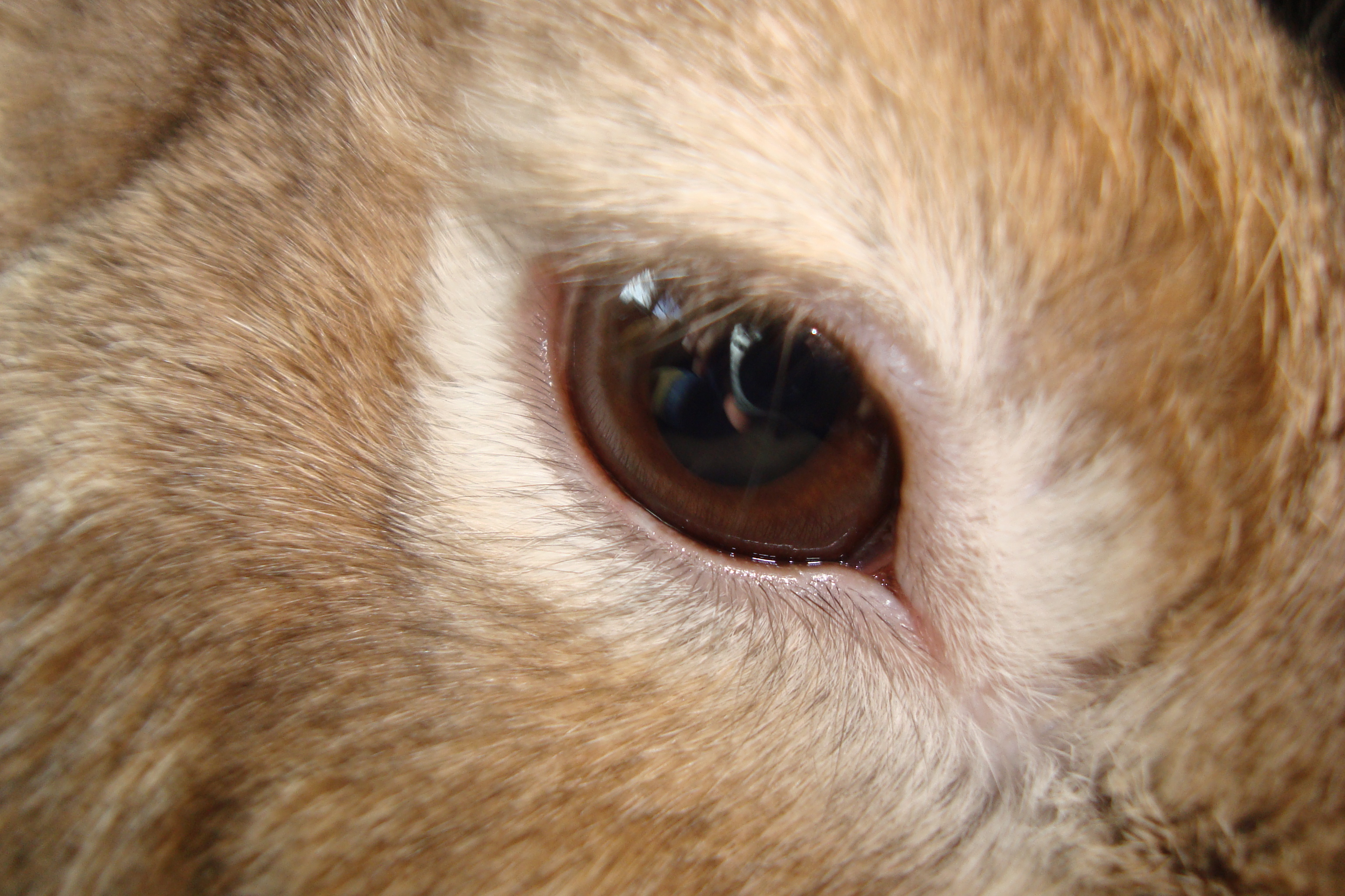 Rabbit Eye Stock One by ducktoller