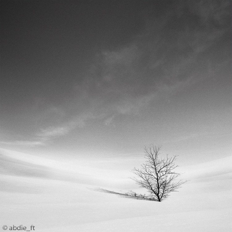 .: Desert Tree :. by abdieft