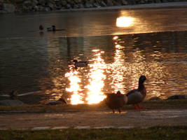 Sunset at the duck pond by Angeyja