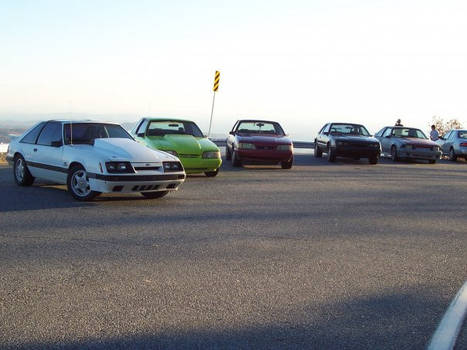 The Family of Mustangs