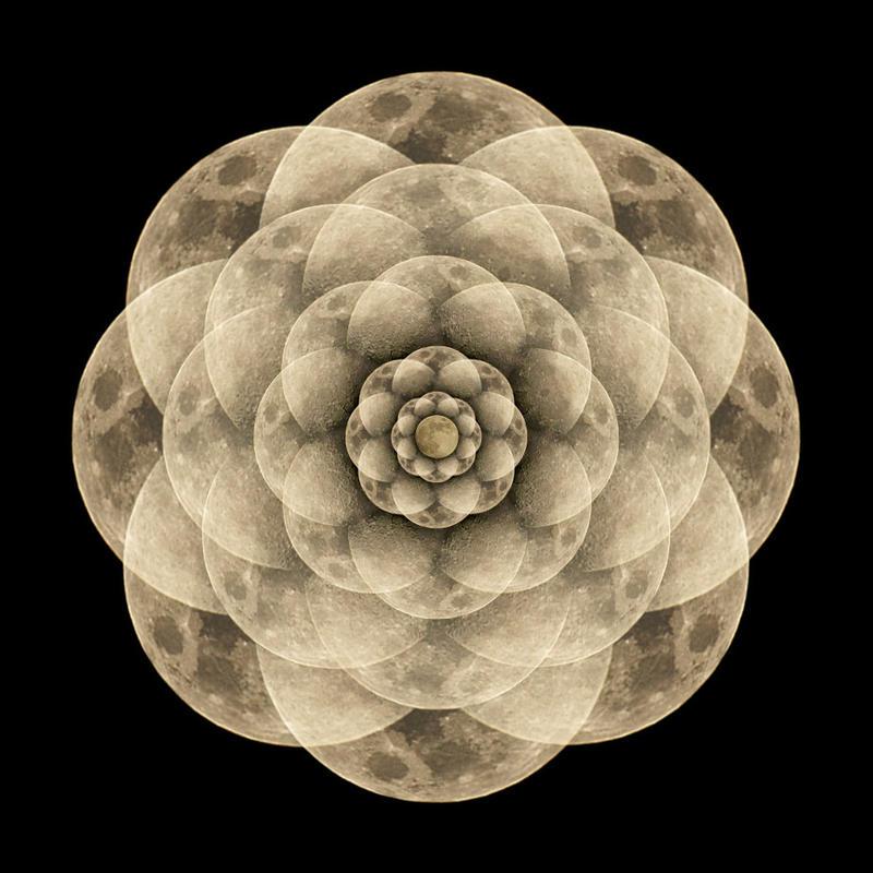 Moon Flower by narmansk8