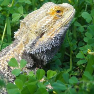 Overlord-Terokagae's Profile Picture
