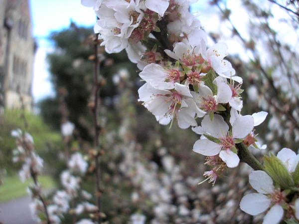 HMSpeedFreek's Photography! Flower____by_HMSpeedFreek