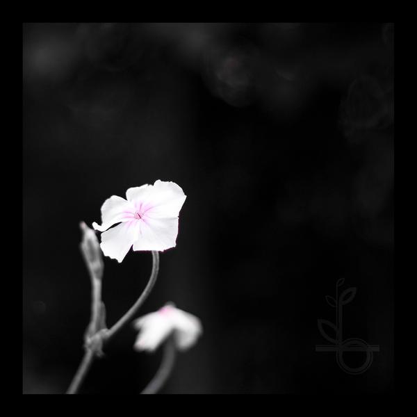 HMSpeedFreek's Photography! - Page 2 A_Splash_of_Pink_by_HMSpeedFreek