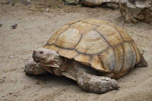 Big Turtle by ponyfleute