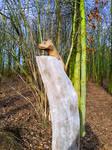 Marten - Sculpture - Stocks by ponyfleute