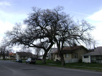 Scary Happy Valley Trees