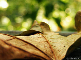 The Leaves Turn by gold-rose