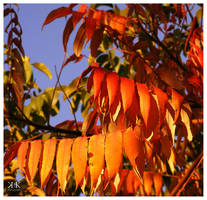 Orange by gold-rose