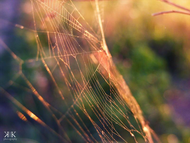 Broken Strings by gold-rose