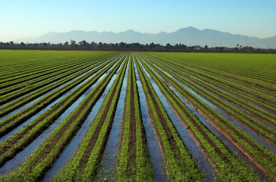 Glendale Arizona Irrigation field by 2wheeldigitalworks on DeviantArt