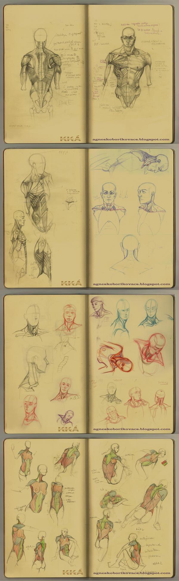 Upper body anatomy -  guide by Valandil0