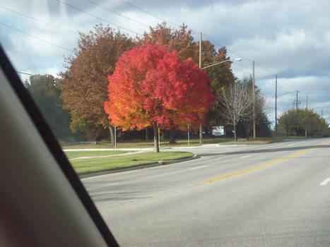 pretty fall tree