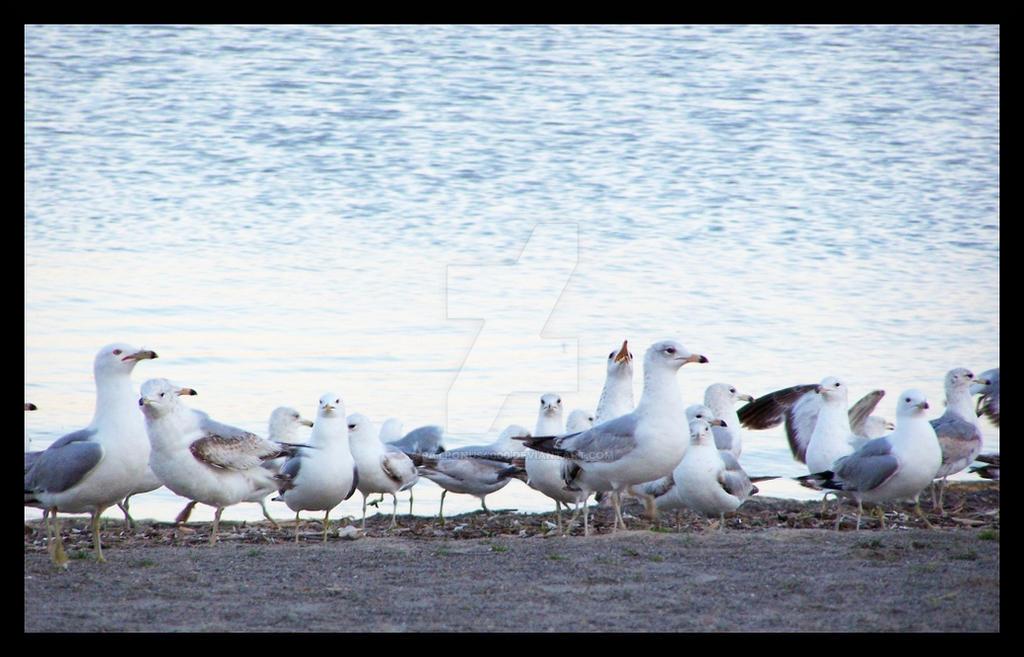 seagulls by patronus4000