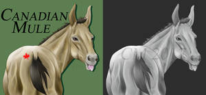 Canadian Mule