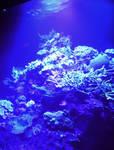 Fluorescent Aquarium Coral under Ultraviolet Light by MuonRayArtLab