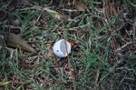The Broken Egg
