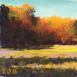 Sunlit Field by ElcinOzcan
