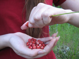 Wild Strawberries by ClericalRodent