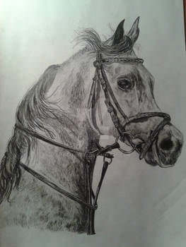 My first horse :)